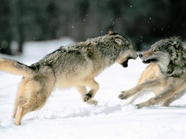 Como extinguir essa raça de lobos ferozes, predadores ferozes do erário público.