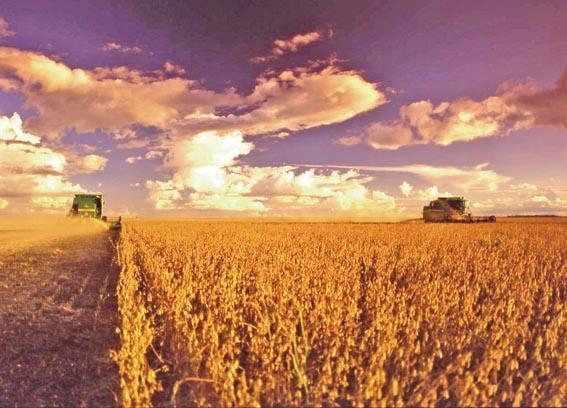 colheitadeira-colheita-de-soja-23-12-05