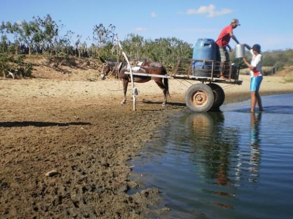 """A leste do Piauí já choveu, mas muito pouco, proporcionando o fenômeno da """"Seca Verde""""."""