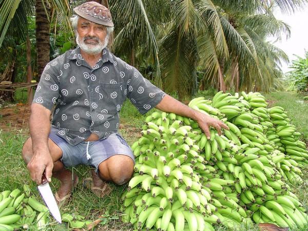 banana-1